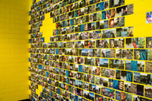 gallery space with walls painted yellow and a brick wall made from hundreds of individual photographs